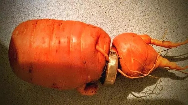 Man finds lost wedding ring on a carrot