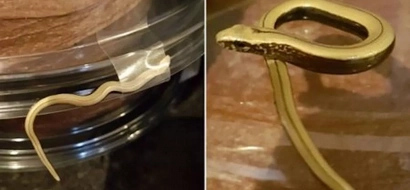Snakes on cakes! Woman gets shock of her life after discovering SNAKE taped to her chocolate cake (photos)