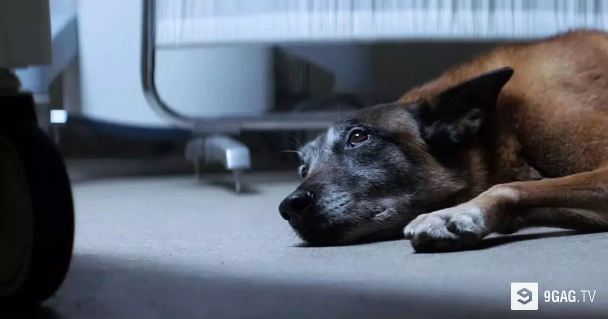 This Heartbreaking Video Of A Dog Sends A Wake Up Call To All Pet Owners Will Make You Cry