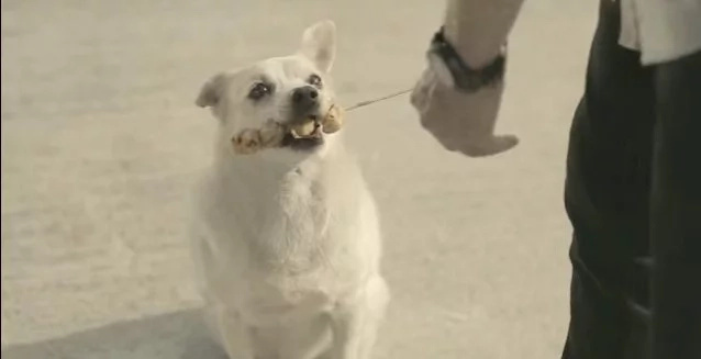 Dog repays kindness in viral Thai commercial