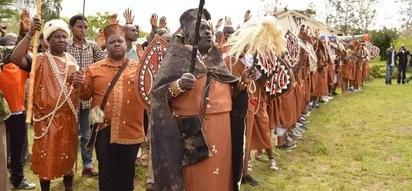 Wazee Wakikuyu wapandisha mori baada ya mti uliopandwa na Uhuru kuharibiwa
