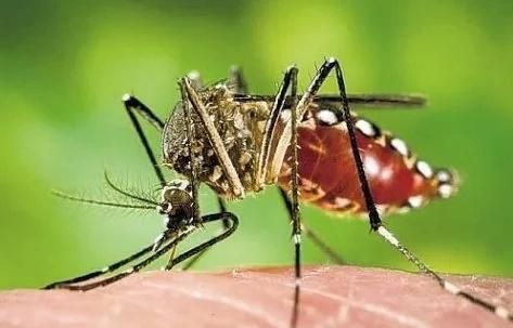 Se incrementan los abortos debido al Zika