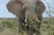 Tragic! Big game hunter crushed to death by elephant he was trying to kill