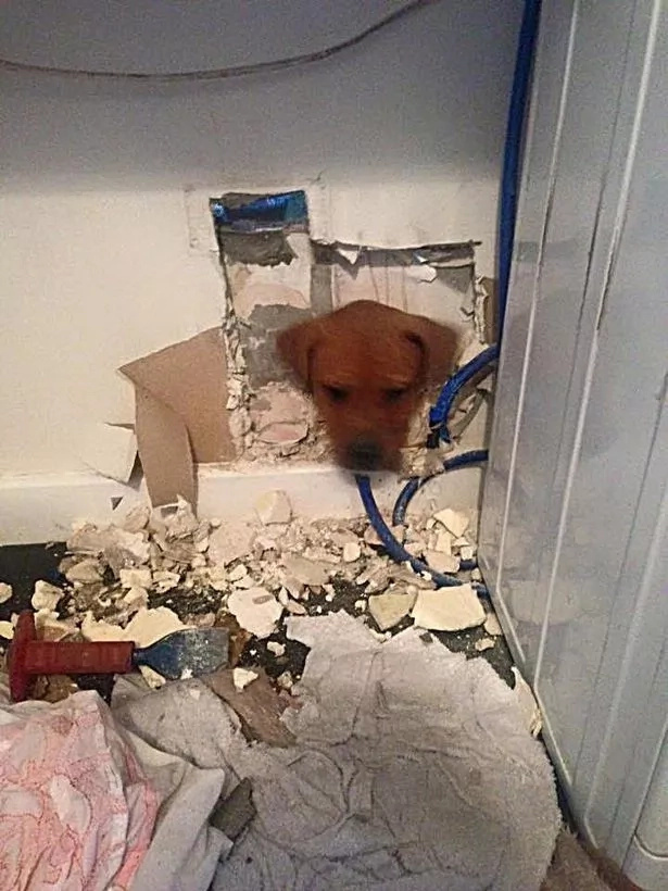 Firefighters Rescuing Puppy With Head Stuck In Wall Will Make Your Day