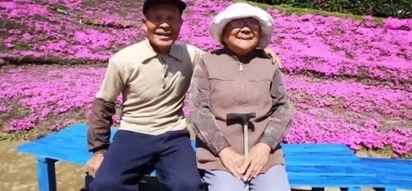 Loving husband plants thousands of flowers for his blind wife to smell