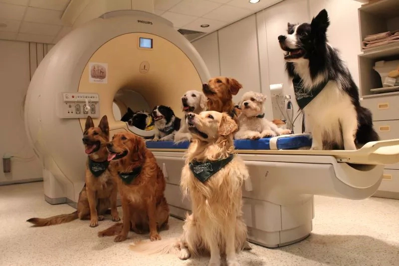 Dogs are capable of understanding more than you think!