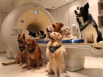 New research shows that dogs are smarter than you think!