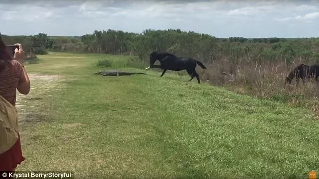 See incredible moment horse pounces on CROCODILE in front of horrified onlookers (photos, video)