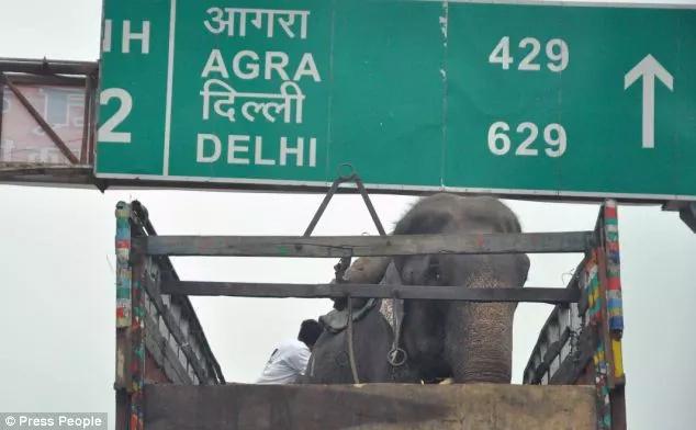 Elefante lloró cuando lo liberaron tras 50 años de cautiverio y torturas