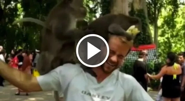 Desvergonzados monos tienen sexo sobre el hombro de este hombre
