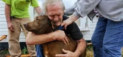 Si no fuera por la lealtad de 2 perros, este hombre habría muerto. Una historia que te conmoverá