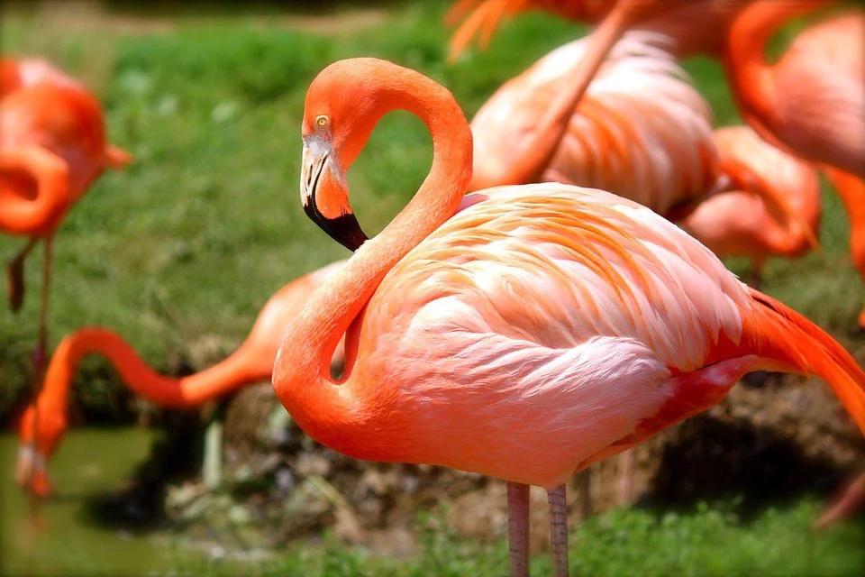 Así rastrearán las aves traficadas en Colombia