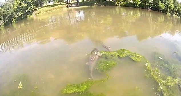 Water snake battles giant cat fish