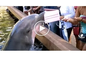 Dolphin jumps out of water and suddenly steals this woman's iPad!