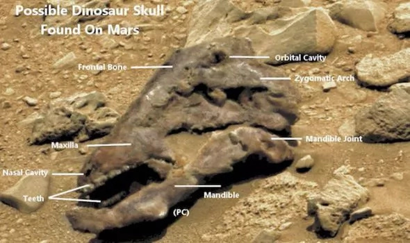 This discover is the actual proof that dinosaurs inhabited Mars centuries ago