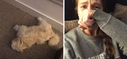 Revealed: Dogs Dream About Their Humans And People Can't Stop Crying Because Of It
