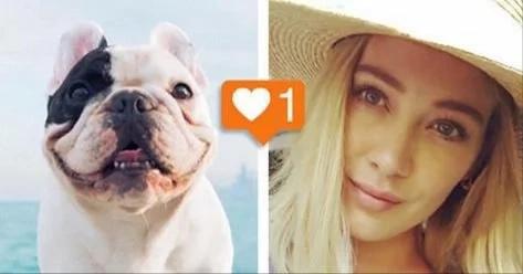 ¿Quién tiene más seguidores en Instagram, este perro o esta celebridad?