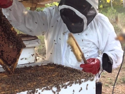Getting started with bee keeping in Kenya