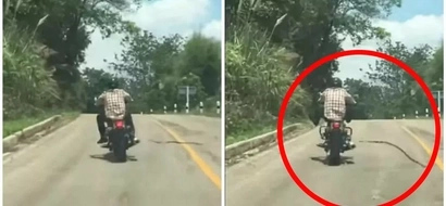 Snakes go mad! Man attacked by FLYING serpent while enjoying his motorbike ride (photo)