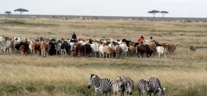 Seek Upto KSh 5M Compensation From KWS If Attacked By Any Of These 16 Animals