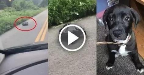 Recogió una bolsa de basura que se movía en la carretera y salvó a una vida inocente