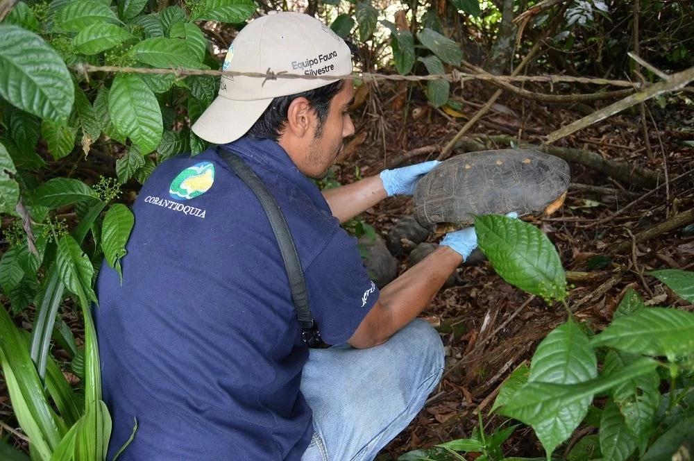 Devolvieron a su hábitat a 135 animales silvestres
