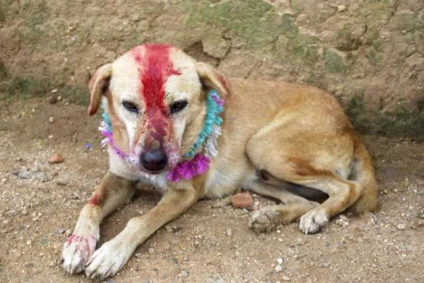 Indian girl forced to marry dog to get rid of curse