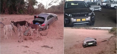 Donkeys caught smuggling stolen luxurious cars at the South Africa - Zimbabwe border