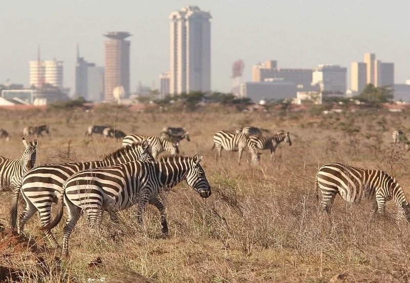 Railway To Pass Through Nairobi National Park Despite Strong Opposition