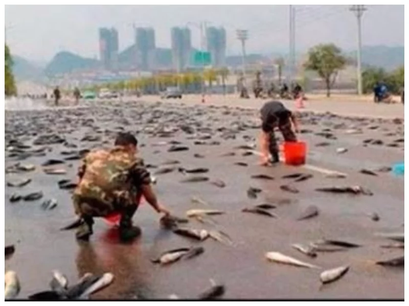 Phenomenon! Fish fall from sky during rain and here is what scientists think