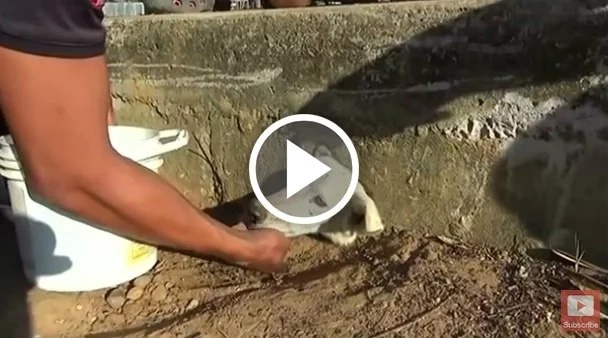 Conmovedor rescate de un perro atrapado en una alcantarilla