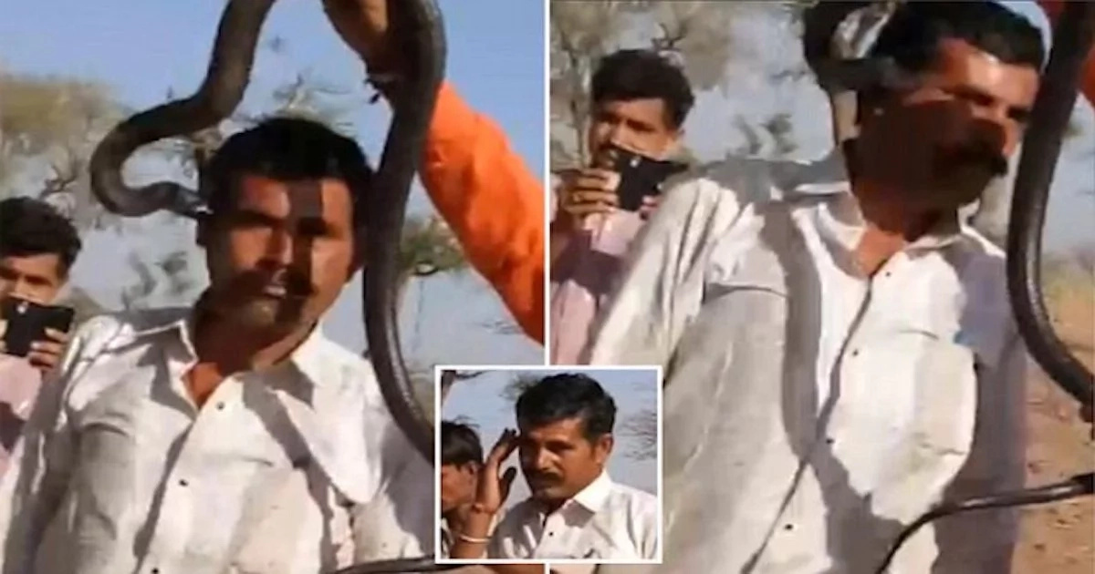 Man doesn't realize cobra bites his FACE as he poses for photo with it, then dies 1 hour later (photos, video)