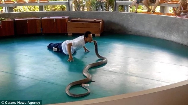 Terrifying moment deadly cobra escapes handler and tries to BITE crowd members during show