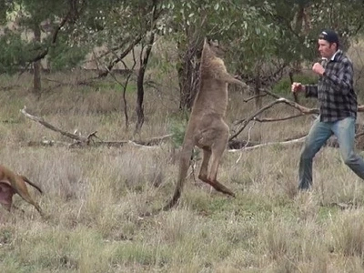 Experts Explain Why The Famous Kangaroo Did What It Did To The Dog