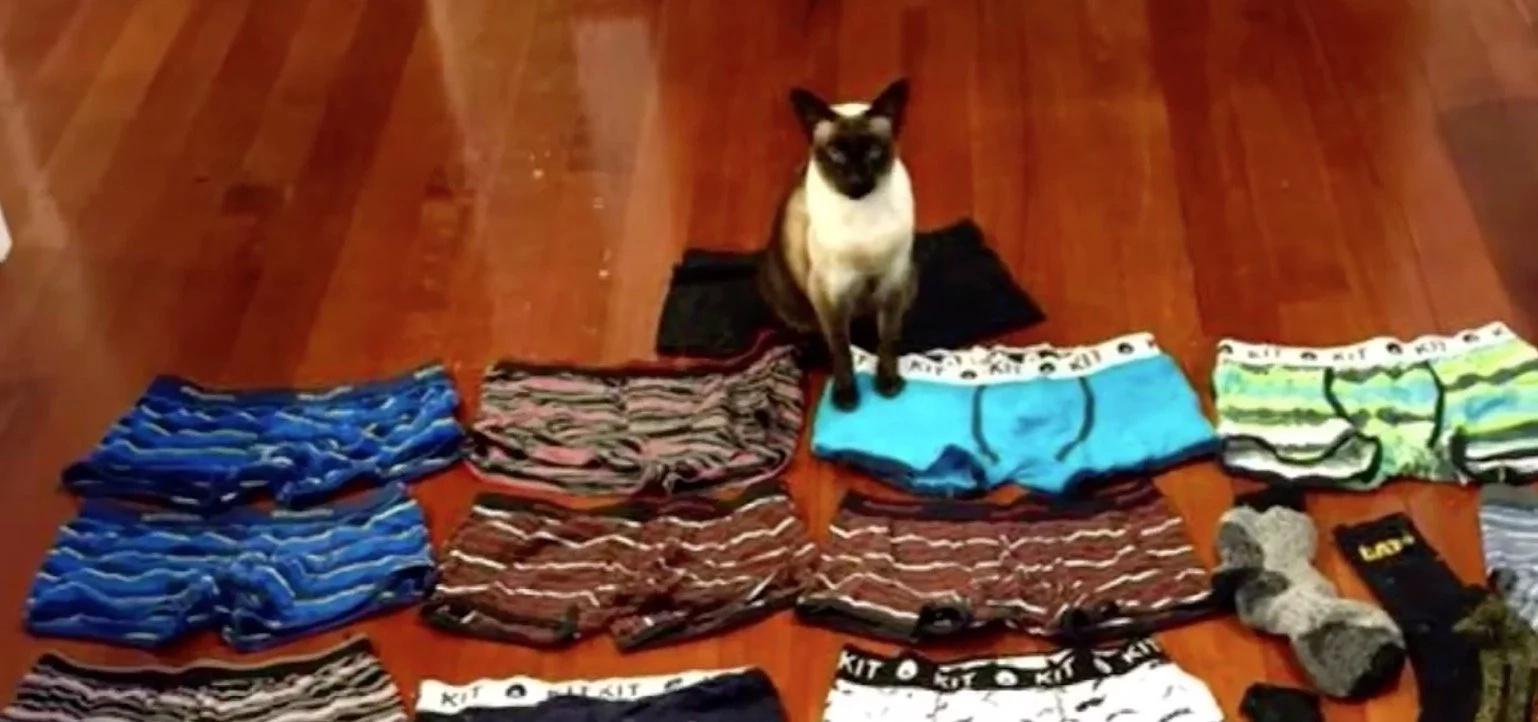 Cat with Underwear