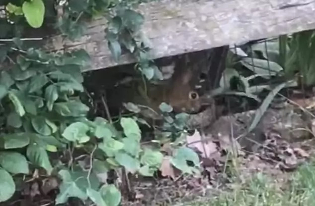 I got your back: Rabbit saves baby bunny from an attacking snake