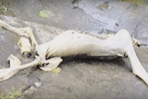 Not Knowing What It Was, Panama Children Found THIS Creature In A Cave