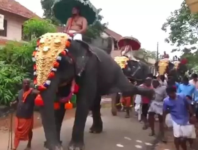 Elephant kicks man's JAW as it is paraded through streets during religious ceremony (photos, video)