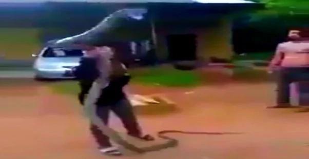 giant-cobra