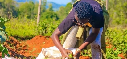 Stop waiting in Nairobi for a KSh 12,000 a month salary, go back to the village and farm- Akothee