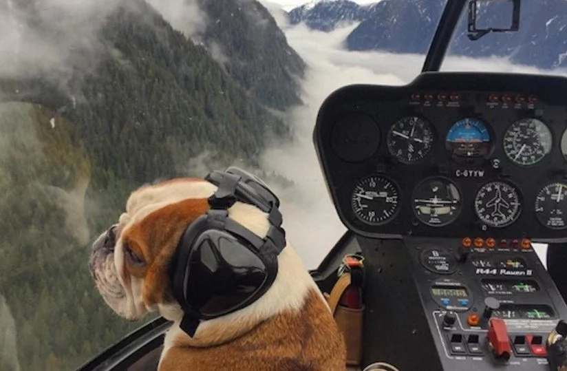 Helicopter Pilot And His Pet Bulldog Go On Wild Adventures
