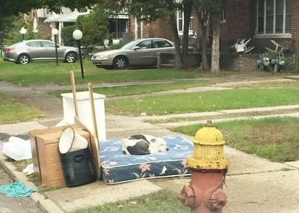 This Dog Waits For His Family To Return, After They Left Him Behind While Moving Out