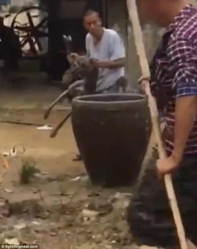 Meten a perro vivo en agua hirviendo para venderlo en China