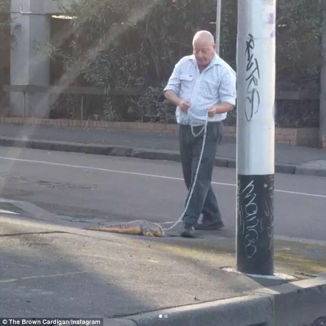 Bizarre! Man spotted in Melbourne city streets walking his pet crocodile