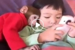 This adorable kid and her naughty monkey have the cutest friendship ever