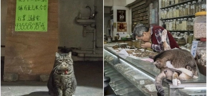 Forget Everything And Watch The SECRET Life Of Chinese Cats (10+ Pics)