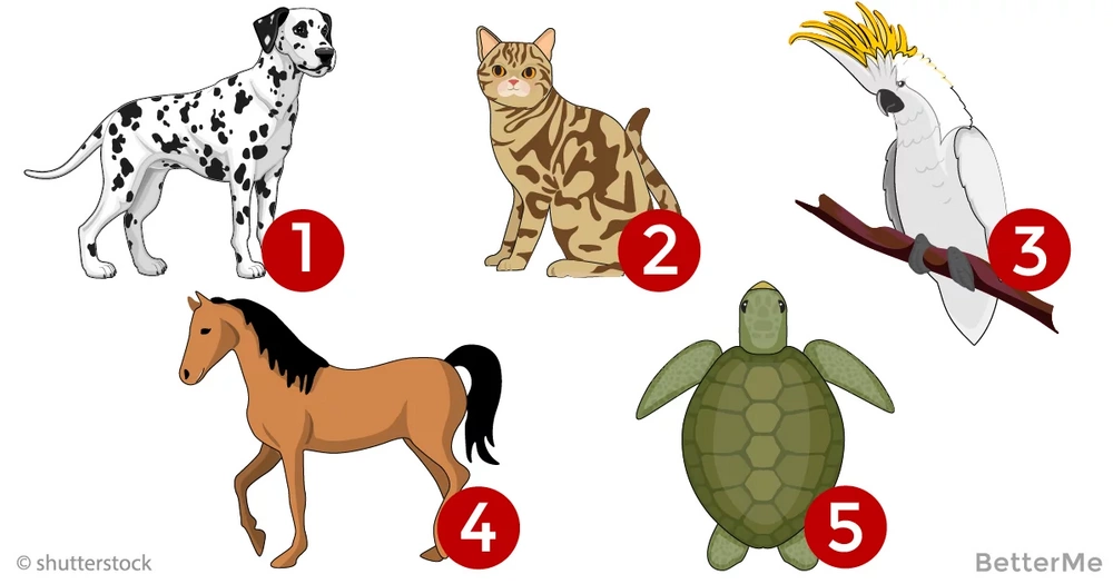 What does your pet choice reveal about you?