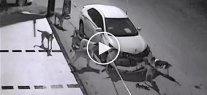 Naulol na askal! Crazy stray dogs caught on CCTV destroying a parked car shock netizens
