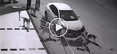 Naulol na askal! Crazy stray dogs caught on CCTV destroying a parked car shock netizens