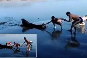 There's hope for humanity! Winter swimmers risk life and limb to save skater who fell through the ice